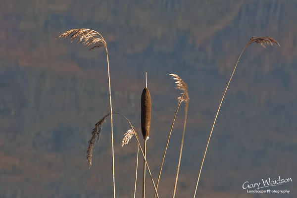 Reeds. Fine Art Landscape Photography by Gary Waidson