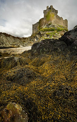 Tioram Castle - Take a View - landscape Photographer of the Year 2008